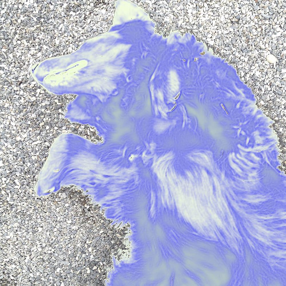 """Klø meg på magen"" D.G.A. trykket på Magiclée Verona HD 240gsm papir Edition 70, x 41 cm Price 2800,-"
